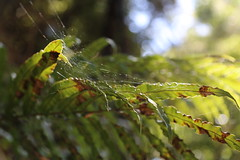 reference-162 (TLCStudentReferences) Tags: helenastackhouse leaves newzealand tree texture bokeh web lichen moss nz flowers