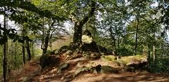 Rudolfklippe (1elf12) Tags: tree rudolfklippe winterberg harz germany deutschland