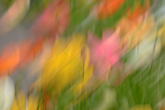 Poppy Abstract (glendamaree) Tags: icm intentionalcameramovement abstract slowshutter poppy