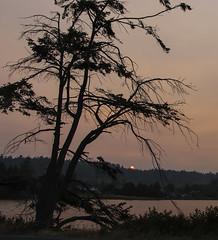 (axiepics) Tags: sunset red redsunset lagoon esquimaltlagoon colwood victoria landscape scenery evening