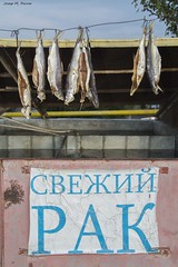 PEIX ASSECANT-SE (Armènia, agost de 2018) (perfectdayjosep) Tags: dryingfish peixassecantse perfectdayjosep sevanarmenia armènia fish peix pescado