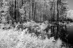 Wetlands IR 3 (Neal3K) Tags: henrycountyga georgia ir infraredcamera kolarivisionmodifiedcamera