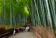 Bamboo forest street (radimersky) Tags: kyoto kioto japan japonia travelphotography azja asia honsiu bambo forest street lumix dmclx100 panasonic day dzień people turists turyści landscape arashiyama wood las tree drzewa bambus bamboo microfourthirds 43 green travel