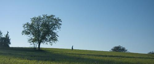 Paved - Silhouette Walk