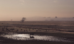 Drought wracked Orbost flats (Skye Auer) Tags: drought snowyriver orbost rural farm dry winter frost weather australia naturaldisaster dawn sunrise morning bushfire