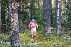 In the forest (dmilokt) Tags: природа nature пейзаж landscape dmilokt лес forest