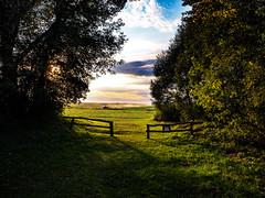 (Jack182_rus) Tags: m43 olympus em10ii leica summilux 15f17 field sunset evening countryside