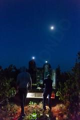 personal205 (blanca aldanondo) Tags: blanca aldanondo cadreita vendimia nocturna viña chardonnay bodega albret