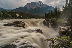 DSC07281 (xxhahue) Tags: jasper national park athabasca falls waterfall alberta travelalberta canadian rockies fluss landschaft wasser