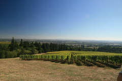IMG_6608 (willsonworld) Tags: willamette valley wine tasting dan diane cat jose david dave grapes 2014