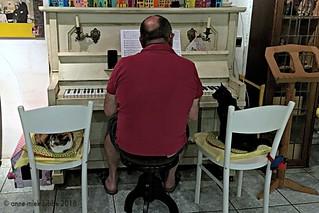 OUR CATS LOVE MUSIC || MARGOTJE & BEAUTJE HELPEN GRAAG BIJ HET INSTUDEREN VAN EEN NIEUW STUK