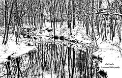 DSC_1296 Winter Reflexions (Cyberlens 40D) Tags: usa uscities nj union parks seasons winter trees stream snow ice cold leafless sky platinumheartaward
