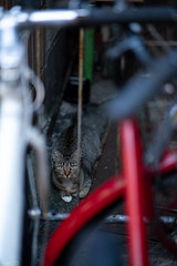 猫 (fumi*23) Tags: ilce7rm3 sony 85mm fe85mmf18 sel85f18 katze gato neko cat chat animal alley street 猫 ねこ 路地 ソニー a7r3 emount