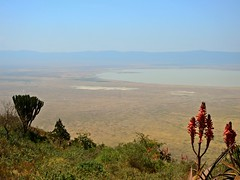 3309ex Ngorongoro Crater from the rim (jjjj56cp) Tags: flowers blossoms blooms crater ngorongoro ngorongorocrater tanzania unescoworldheritagesite sevennaturalwondersofafrica winter july vast vastness water vistas candelabratree green red brown bluesky p900 jennypansing agave agaveplant redblossoms redflowers