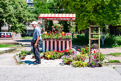 _DSC0030.jpg (matipl) Tags: florist flowerseller seller street hrvatska novisad croatia europe colorful southbačkadistrict serbia rs
