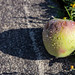 Apple on the street