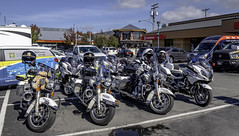 Some of the escorts mounts (Tony Tomlin) Tags: whiterockbc britishcolumbia canada copsforcancer charityride police