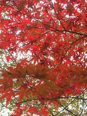 a (30) (hiromi89) Tags: japan beauty beautiful scenery flower wood pond