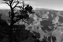 Grand Canyon National Park. Yavapai point. (Massimo Margagnoni) Tags: blackandwhite margagnoni america nature usa grandcanyon fineart landscapes
