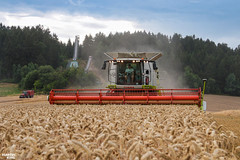 Wheat Harvest by CLAAS (martin_king.photo) Tags: harvest harvest2018 ernte 2018harvestseason combineharvester combine harvester new modernmachine summerwork powerfull martin king photo machines strong agricultural great czechrepublic agriculturalmachinery farm working modernagriculture landwirtschaft martinkingphoto moisson machine machinery field huge big sky agriculture power dynastyphotography lukaskralphotocz day fans work place yellow gold golden eos country lens rural camera outdoors outdoor goldenhour colours landscape fields lines masseyferguson claaslexion three