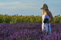 Fotografando (marypink) Tags: plateaudevalensole provenza provence francia france girasoli sunflowers summer estate fioritura nikond7200 nikkor70200f28