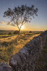 Sunset Tree (John__Hull) Tags: sunset sunlight stone wall fence charnwood forest leicestershire england uk nikon d7200 sigma 1020mm landscape clouds
