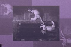 Kittens | Cats Edition 10 (Robert Krstevski) Tags: robertkrstevski photography cat cats pets pet animal animals kitty kitten gatos kittens kitties colors мачки македонија catsphotography catsedition outdoor petlovers peta cute flickr photooftheday photograph photo photographer little love lovely tumblr frames frame