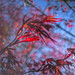Red Leaves in the Sky