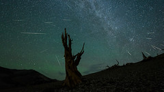 Perseid Meteor Shower Northward (Jeffrey Sullivan) Tags: persied meteor shower composite tree mono county california usa easternsierra astronomy astrophotography landscape nature travel night photography workshop nikon d750 photo copyright august 2018 jeff sullivan