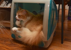 Jimmy TV (rootcrop54) Tags: jimmy orange ginger tabby longhaired longhair male cat imac diy bed neko macska kedi 猫 kočka kissa γάτα köttur kucing gatto 고양이 kaķis katė katt katze katzen kot кошка mačka gatos maček kitteh chat ネコ