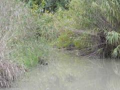 DSCN9965 (Gianluigi Roda / Photographer) Tags: autumn 2012 creeks streams lavinocreek autumncolors countryside pianura november