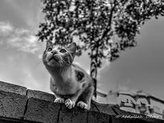 Cat 69 (`ARroWCoLT) Tags: cat kedi lechat gatinha gato katze 猫 قط