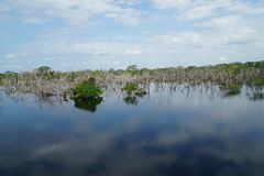 Flooded Forest (tim ellis) Tags: holiday amazon iracema rionegro jauriver tree river manaus brazil