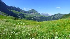 Etendue de fleurs dans les Aravis (ViveLaMontagne67) Tags: france alpes alpen alps savoie savoy aravis bleu vert verdoyant pâturages prairie fleurs ensoleillé sunny flowers meadow grassland green blue sky mountain landscape