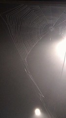 Stop Sign Spider Web (ccbarr) Tags: