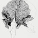 Iris byJulie de Graag (1877-1924). Original from the Rijks Museum. Digitally enhanced by rawpixel.
