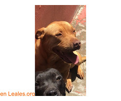 ¡¡¡ ADOPCIÓN RESPONSABLE !!! (Leales.org • tu guía animable) Tags: adopta adoptar adoptanocompres noalmaltratoanimal adopción sebusca extraviado perdido perro gatos lealesorg