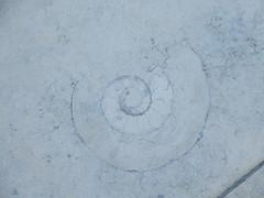 264:365, 2018, Ammonite IMG_6419 (tomylees) Tags: ammonite westfield stratford london september 21st friday 2018 project 365