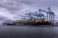 APM Container terminals at Rotterdam Harbour Maasvlakte II (Dannis van der Heiden) Tags: apm ship vessel water amaliahaven sky container terminal containerterminal containers msc rotterdam nikond750 d750 tokina1628mmf28 mscoliver apmterminals netherlands