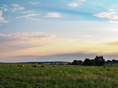 countryside evening (Jack182_rus) Tags: m43 olympus em10ii leica summilux 25f14 landscape countryside village cows horses sunset field