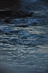 Mar ( Al atardecer ) (Aprehendiz-Ana Lía) Tags: flickr nikon azul blue ola onda water piedra roca luz espuma vida analialarroude mdq playa beach nature naturaleza argentina atlántico