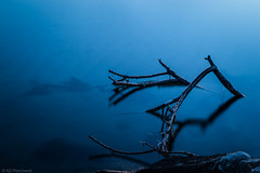 Broken limbs (Anthony P.26) Tags: category kapidag places tatlisu travel turkey canon1585mm canon70d canon outdoor travelphotography water sea bay calmwater marmarasea dusk evening blue serene calm peace tree branch limb lightandshadow