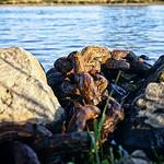 Kette im Fluß thumbnail