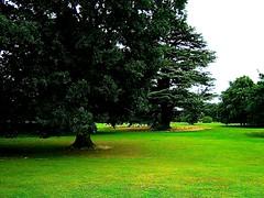 Trees (Martin Pettitt) Tags: 2018 burystedmunds compactcamera digitalcamera finepix fujifilmf610 hardwickheath heath outdoor park suffolk trees uk