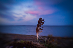 Late summer eve at Åsgårdstrand (Birgit F) Tags: august2018 lensbaby norway olympusem10 sol22 m43 micro43 oly photobirgitfostervold prototype seeinanewway solnedgang sunset testing åsgårdstrand
