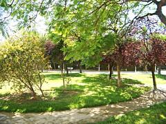 Arboleda en el Jardín del Turia - València (Kiko Colomer) Tags: francisco jose colomer pache kiko valencia valence jardin turia antiguo cauce rio centro ciudad urbano historico naturaleza paseo colores