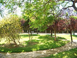 Arboleda en el Jardín del Turia - València