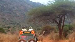 Tsavo (overlandtraveladventures) Tags: kenya kenyansafari kenyasafari tsavo