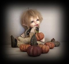 Teddy is ready for fall (Jonquil O) Tags: realpukiara zara teddy realpuki fairyland bjd heliantas