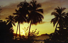 Antilles Sunset - 1996 (philippe_lauga) Tags: coconuts cocotiers plages beach sunset antilles france guadeloupe martinique